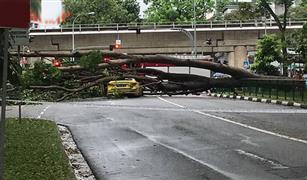 سقطت شجرة على سيارة أجرة فنجى السائحين وأصيب السائق