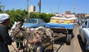 محافظ القاهرة: إنخفاض نسبة سير عربات الكارو بالعاصمة بنسبة 40%