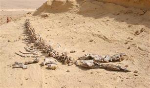 انقاذ سائحتين إيطاليتين و14 مصريا تعطلت بهم سيارتين فى صحراء وادي الحيتان بالفيوم