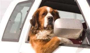 كيف تتفادى مخاطر القيادة بصحبة كلبك الأليف