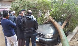 تهشم سيارتين سقطت عليهما شجرة بمحور ولى العهد